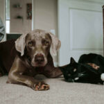 Can Dogs Eat Cat Food? 4 Harmful Side Effects