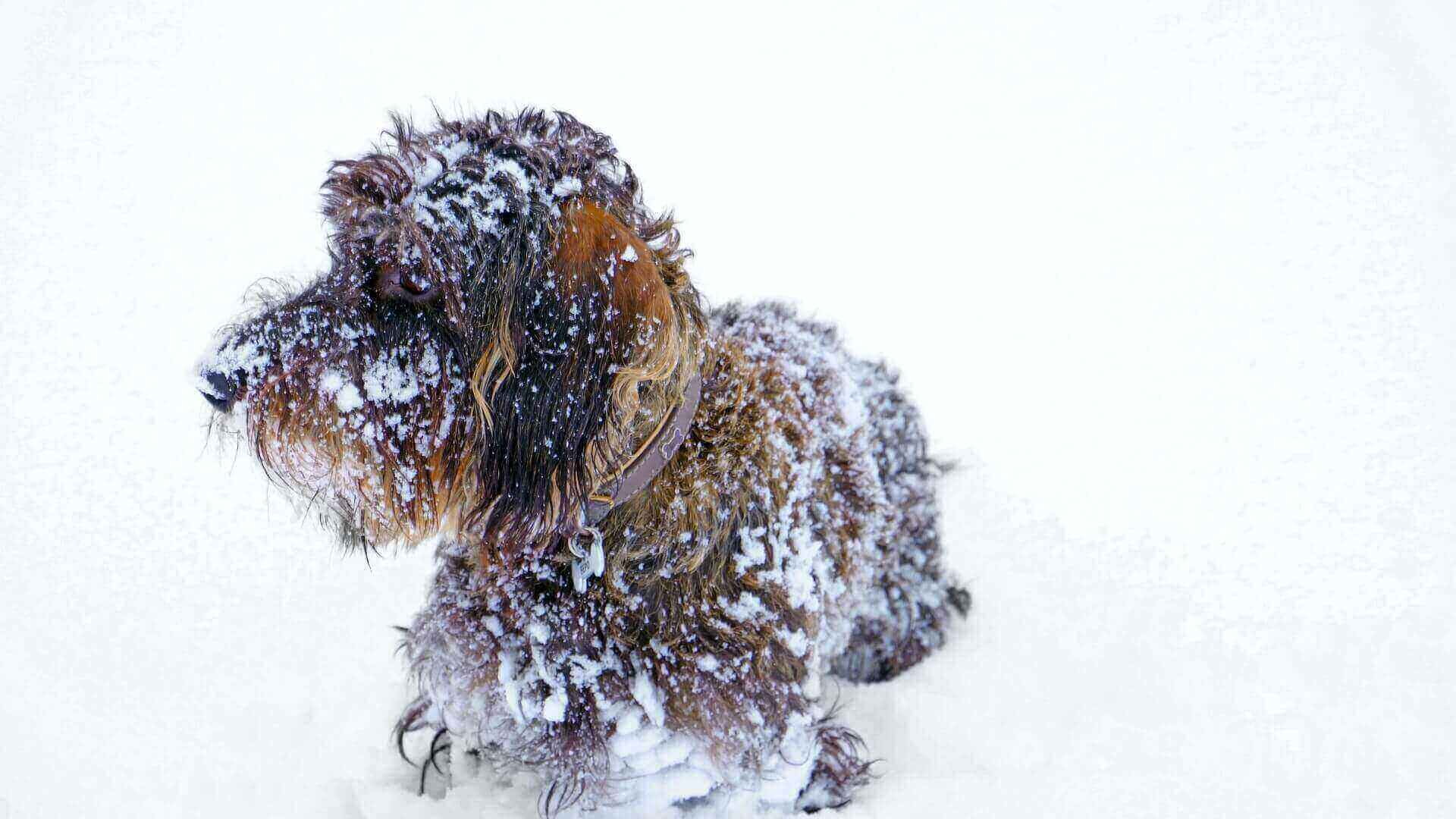 How to get ice balls off dogs paws
