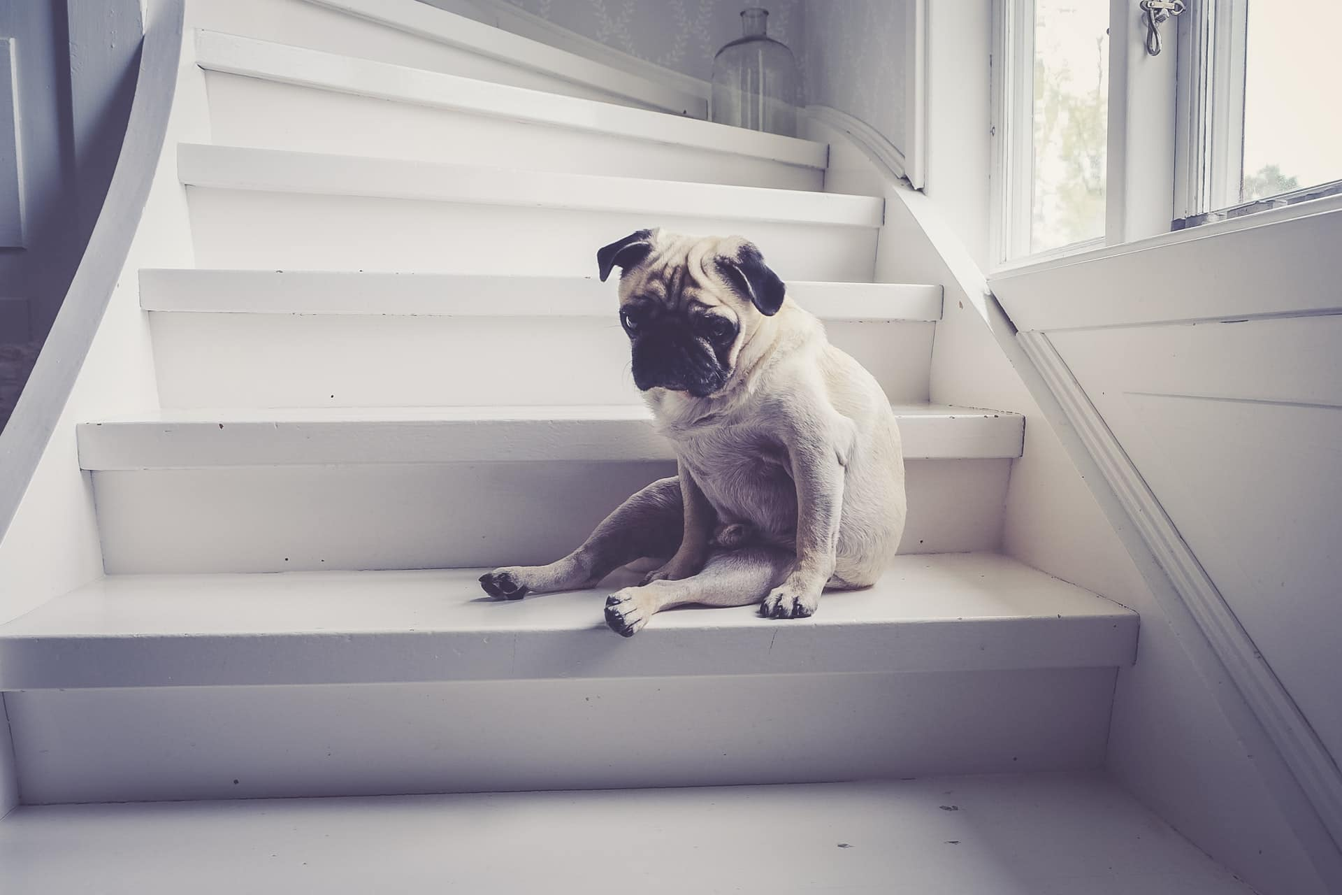 are stairs bad for dogs