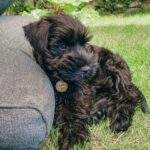 Do Dogs Know Their Name? 3 Direct Reasons Why Dogs Need To Know Their Name