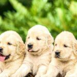 How Fast Do Puppies Grow?
