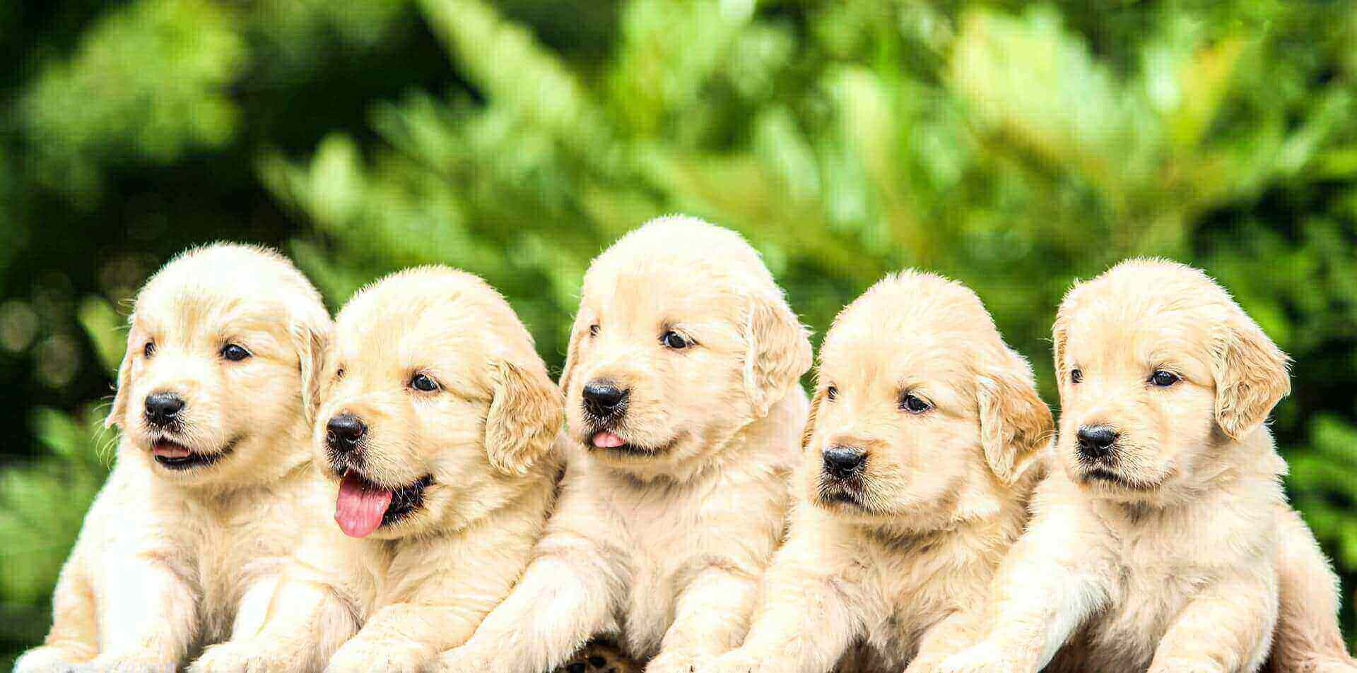 how fast do puppies grow