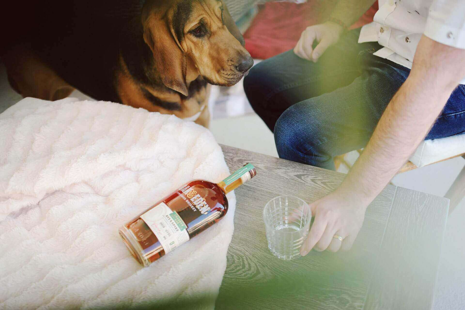 What can dogs drink