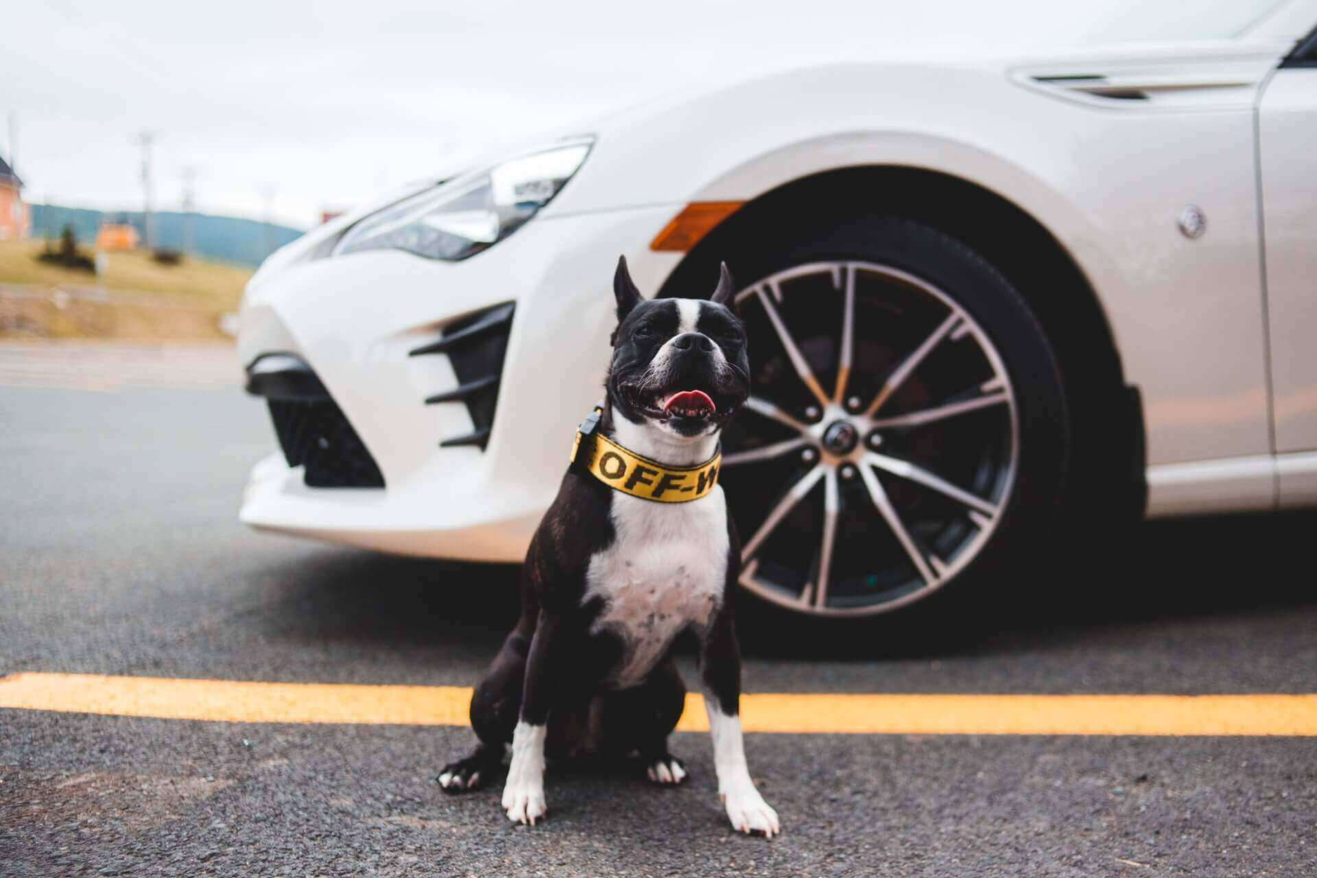 How to secure dog in car with a leash