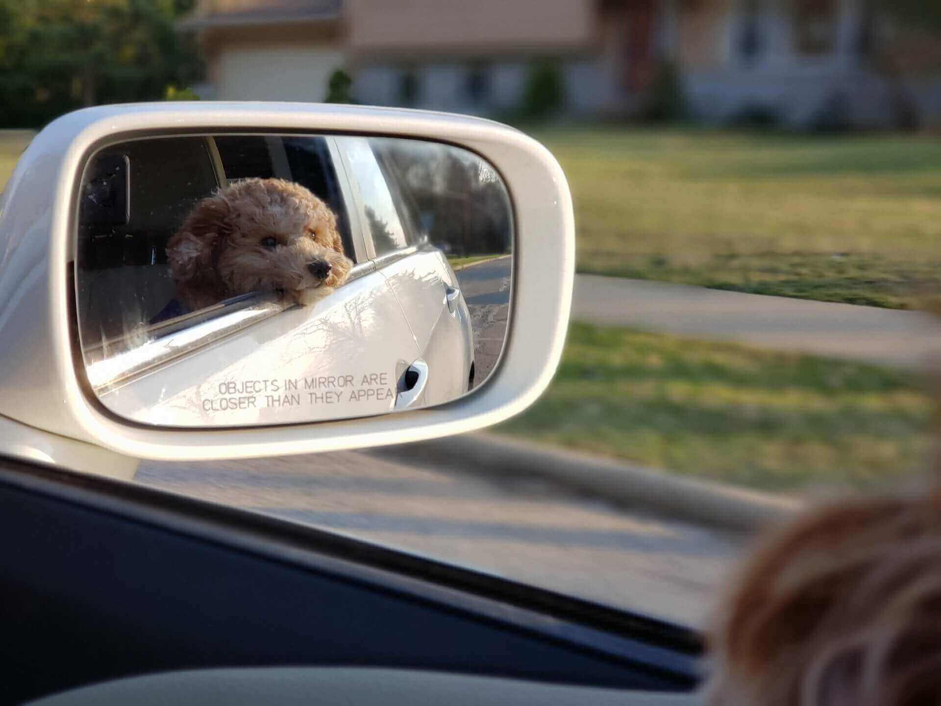 How to use seat belt for dog in car