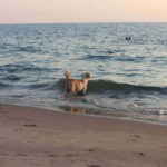 Can Dogs Smell Water? 5 Simple Steps To Train Your Dog