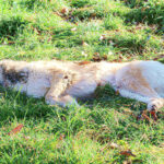 Dog Behavior Before Death : 9 Signs Your Dog Is Dying