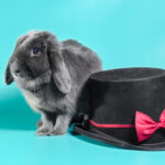 Lop Bunny Price : How Much Are Lop Bunnies? 7 Clear Steps To Breed Lops