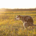 White Specks In Dog Poop : 4 Most Important Reasons