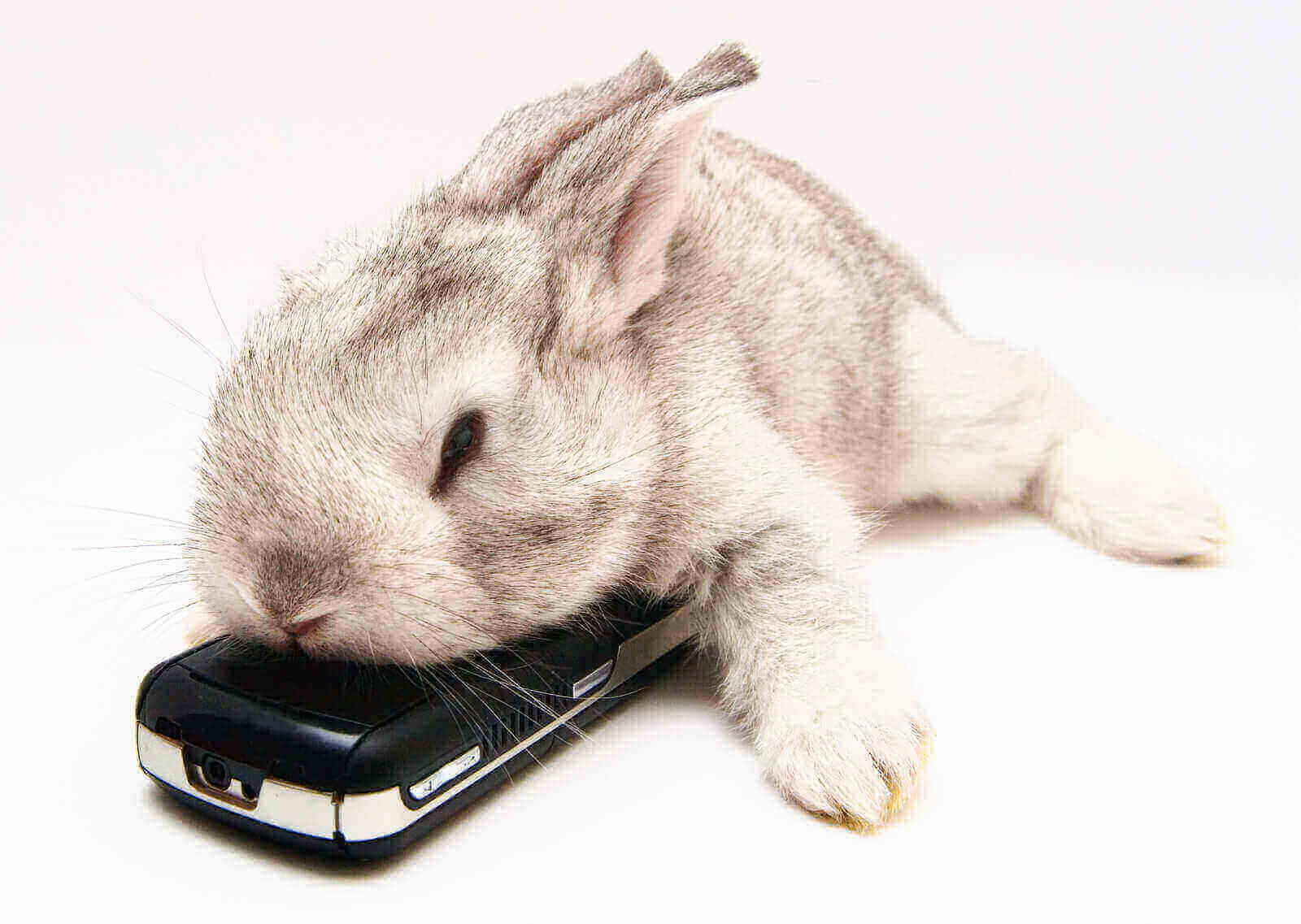 are rabbits nocturnal diurnal or crepuscular