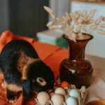 Foods Fatal To Rabbits : Avoid 7 Toxic Foods For Bunnies