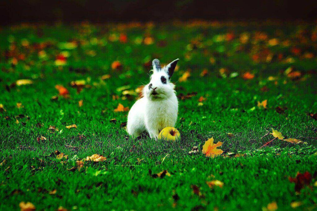 can rabbits eat apples and apple seeds
