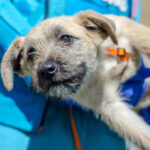 How To Pick Up A Dog? 7 Clear Tips To Pick Up A Dog The Right Way