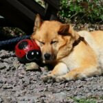 Dog Breathing Fast While Sleeping : 7 Reasons Why Does My Dog Breathe Fast When Sleeping