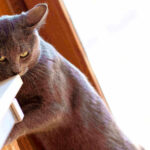 How Long Can A Cat Go Without Eating? (5 Best Alternatives)