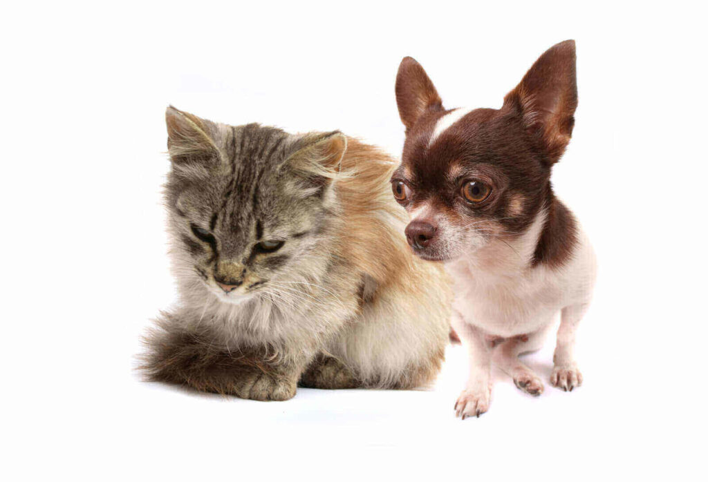 can cats get parvo from dogs
