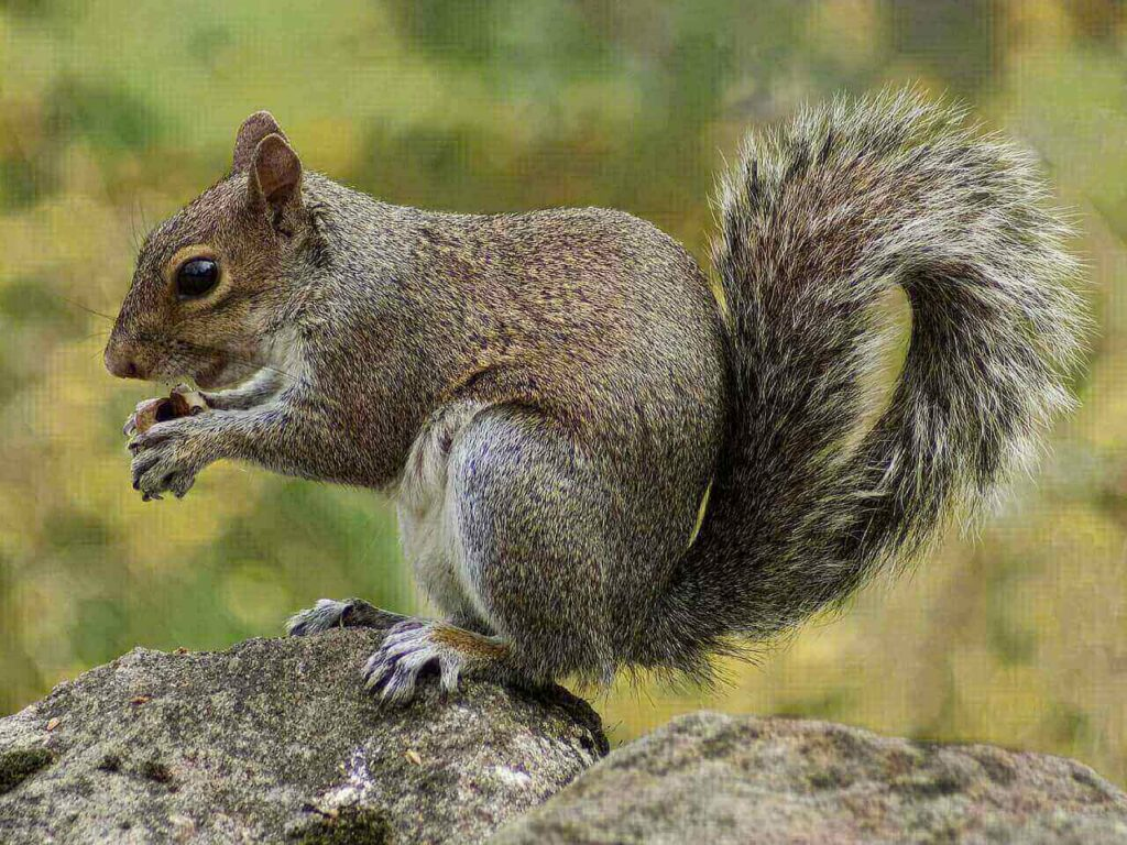 dog ate a squirrel - can dogs have squirrels