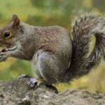 Dog Ate a Squirrel : Can Dogs Eat Squirrels? 7 Brutal Consequences