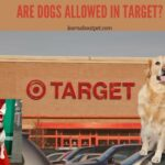Are Dogs Allowed In Target? 5 Good Certified Dog Types Allowed
