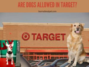 Are Dogs Allowed In Target