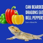 Can Bearded Dragons Eat Bell Peppers? 11 Interesting Facts!