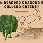 Can Bearded Dragons Eat Collard Greens? 9 Interesting Facts