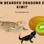 Can Bearded Dragons Eat Kiwi? 11 Healthy Nutrients In Kiwis For Bearded Dragons