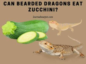 Can bearded dragons eat zucchini