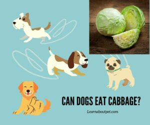 Can Dogs Eat Cabbage