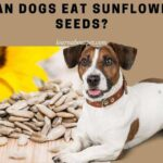 Can Dogs Eat Sunflower Seeds? (9 Interesting Facts!)