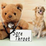Can Dogs Get Sore Throats? 9 Conclusive Symptoms For Dog Sore Throat