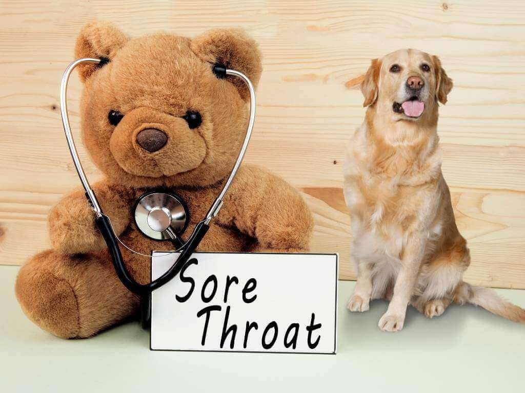 Can Dogs Get Sore Throats