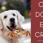 Can Dogs Eat Crab And Crab Shells? 7 Cool Facts