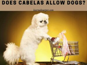 Does Cabelas Allow Dogs - cabela's dog policy - cabela's pet policy
