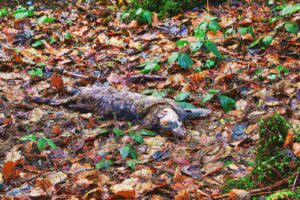 How Long Does It Take For An Animal To Decompose