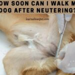 How Soon Can I Walk My Dog After Neutering? 4 Clear Stages Of Dog Recovery
