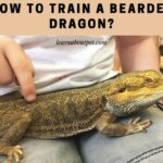 How To Train A Bearded Dragon? 11 Interesting Methods