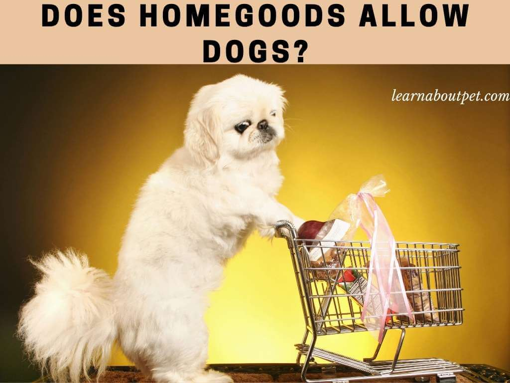 Is homegoods dog friendly