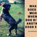 What Does It Mean When A Dog Bites Another Dogs Ear? 5 Clear Ways To Train Dogs Not To Bite