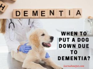 When To Put A Dog Down Due To Dementia