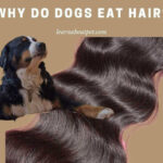 Why Do Dogs Eat Hair? 5 Clear Reasons For Dogs Eating Hair Off The Floor