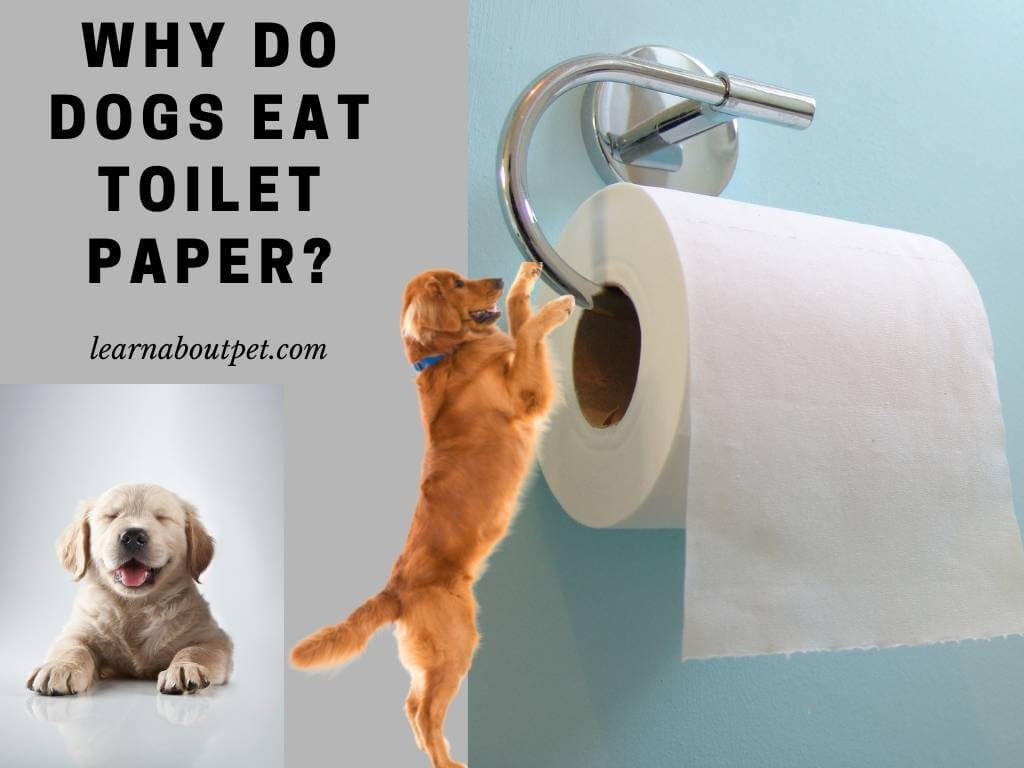 Why Do Dogs Eat Toilet Paper