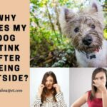 Why Does My Dog Stink After Being Outside? 7 Reasons For Strong Dog Smell