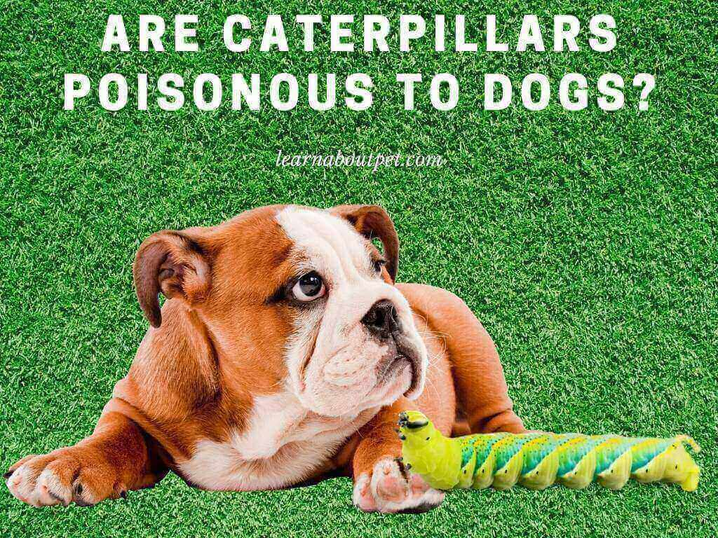 are caterpillars poisonous to dogs