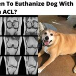 Euthanize Dog With Torn ACL? 4 Good & Conclusive Surgeries