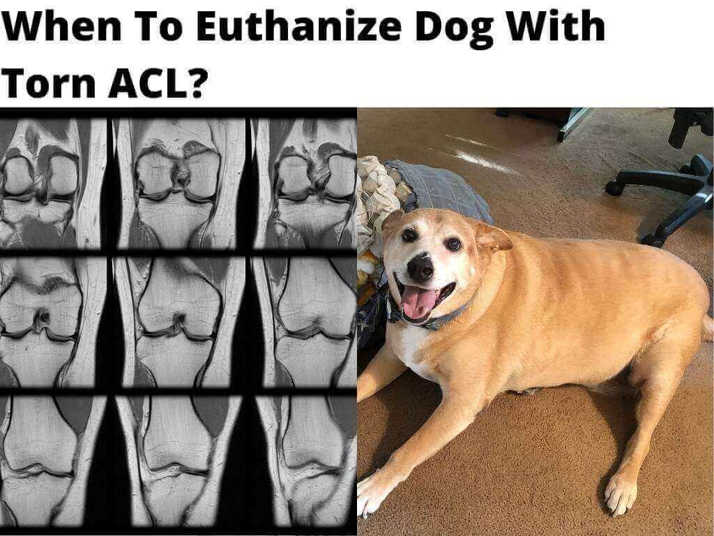 Euthanize Dog With Torn ACL