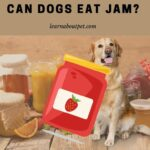 Can Dogs Eat Jam? (9 Interesting Facts!)