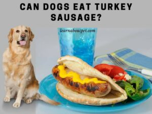 can dogs eat turkey sausage