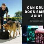Can Drug Dogs Smell Acid Tabs And LSD? 7 Interesting Cop Dog Facts