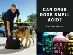 can drug dogs smell acid